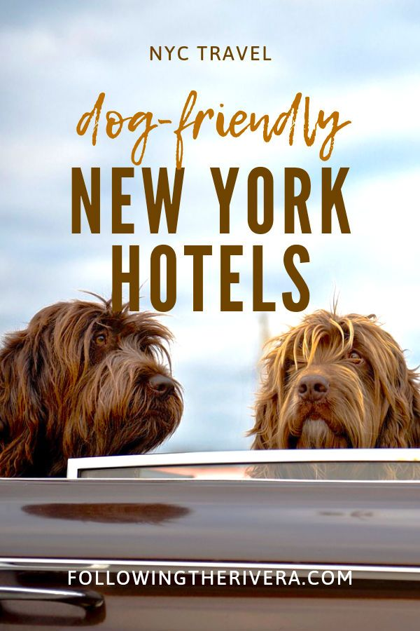 Dog Friendly Hotels Nyc 1 Sensational Boutique In Soho Dog