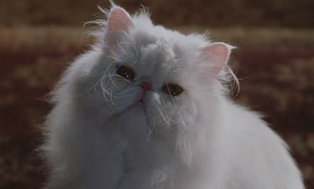 Cats Dogs 2001 Cinema Cats Dog Cat Cats Dogs