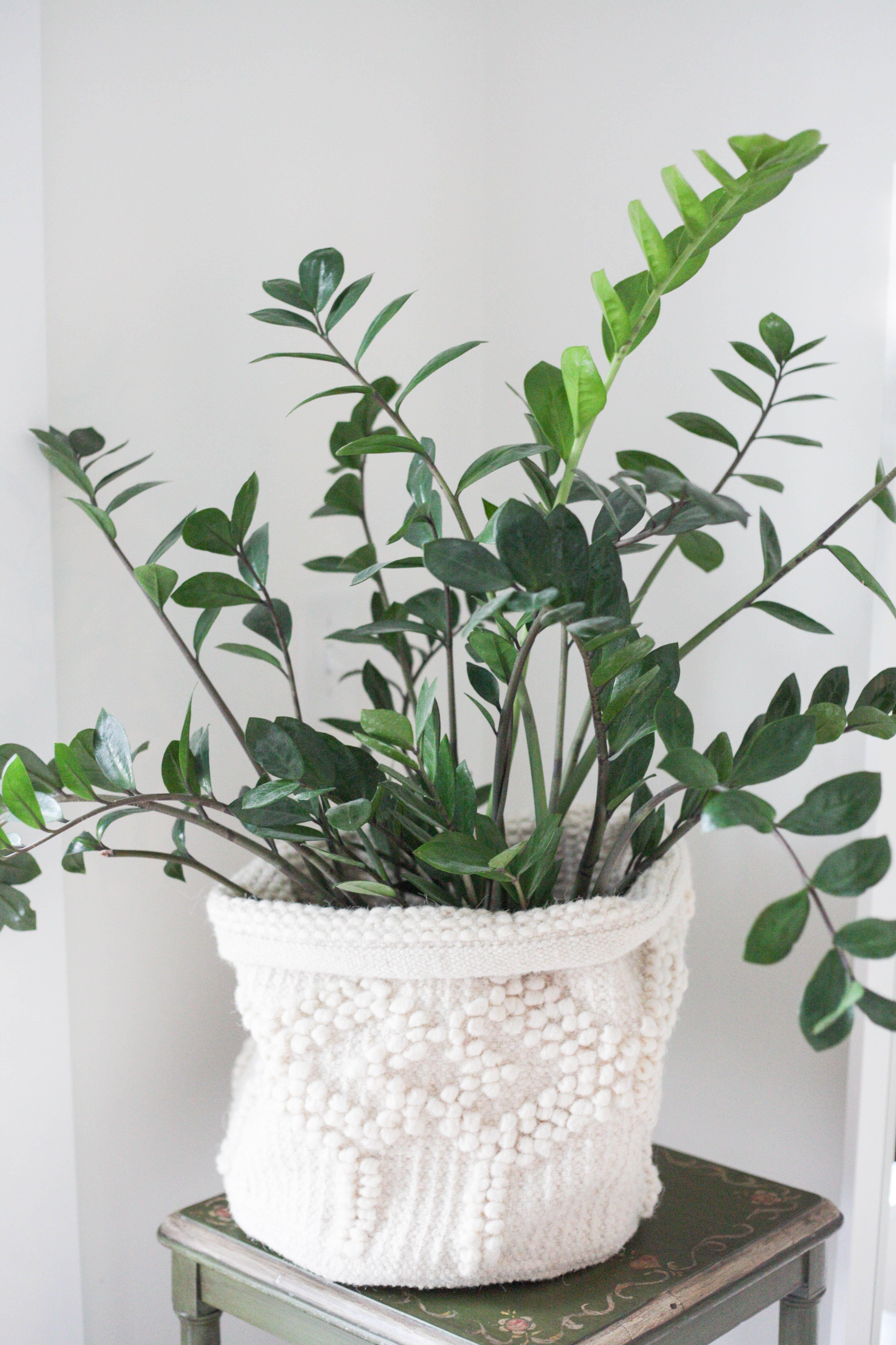 7 Amazing Low Light Indoor Plants | Bathroom plants ...