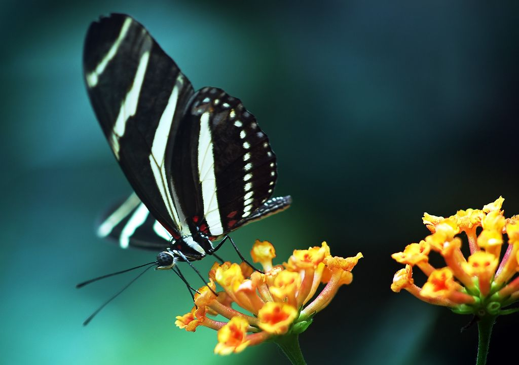Free Download Wallpapers 16 Butterfly Wallpaper Flower Desktop Wallpaper Wallpaper Free Download