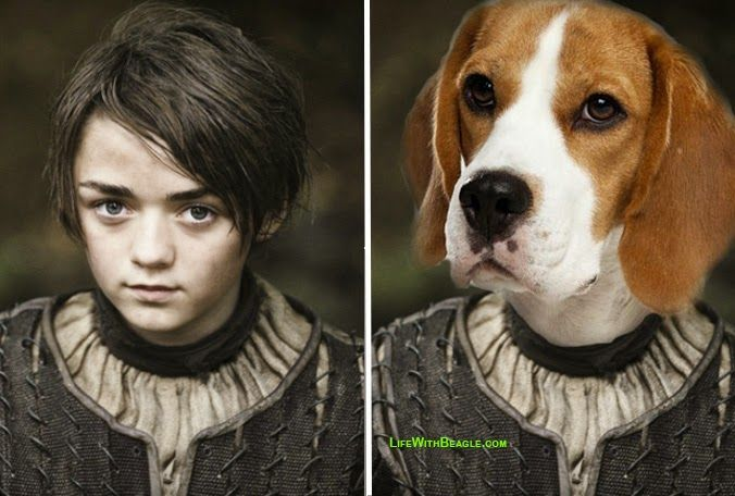 Life With Beagle If Game Of Thrones Characters Were Dogs