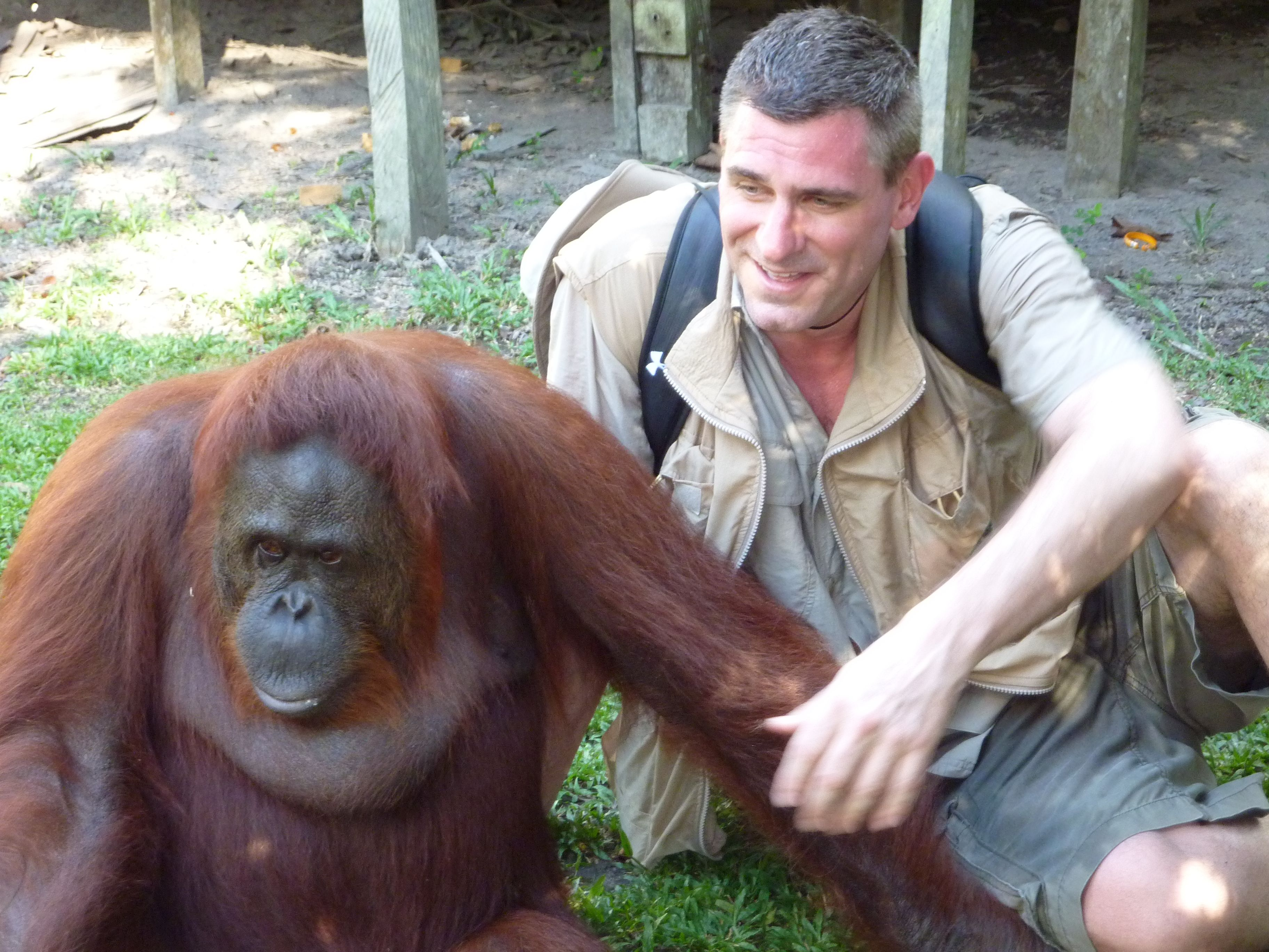 Jungle Joe Plays Ball with Local Wild Orangutan in Borneo