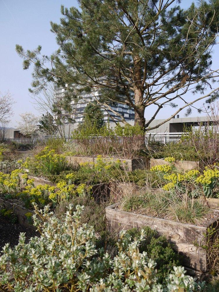 Prozessorientiertes Konzept - Studio Vulkan Landschaftsarchitektur