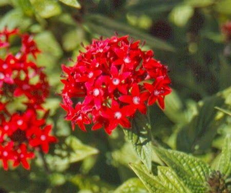 Plantas ornamentales con sus nombres lamina buscar con for Nombres d plantas ornamentales