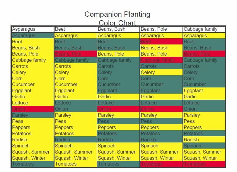 245613ae78f5a5cf51aeab3a6dac3a19 - Square Foot Gardening Planting Chart Pdf