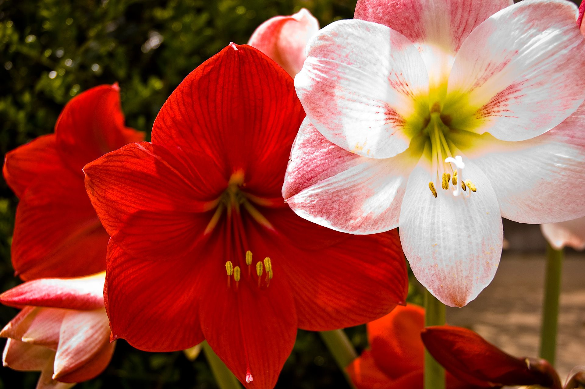 Types Of Flowers Types Of Flowers A Z Common Types Of Flowers