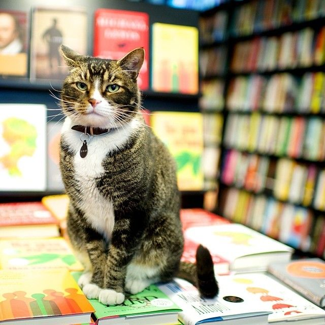 Tiny Tabby Cat Community Bookstore Park Slope Brooklyn Ny Bookstore Cats Cats Cat Books