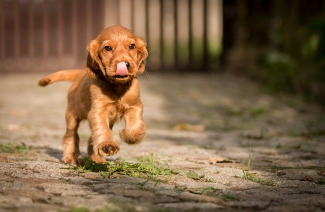 7 Breeds of Dog that Do Well in Apartments | Dogs, kids ...