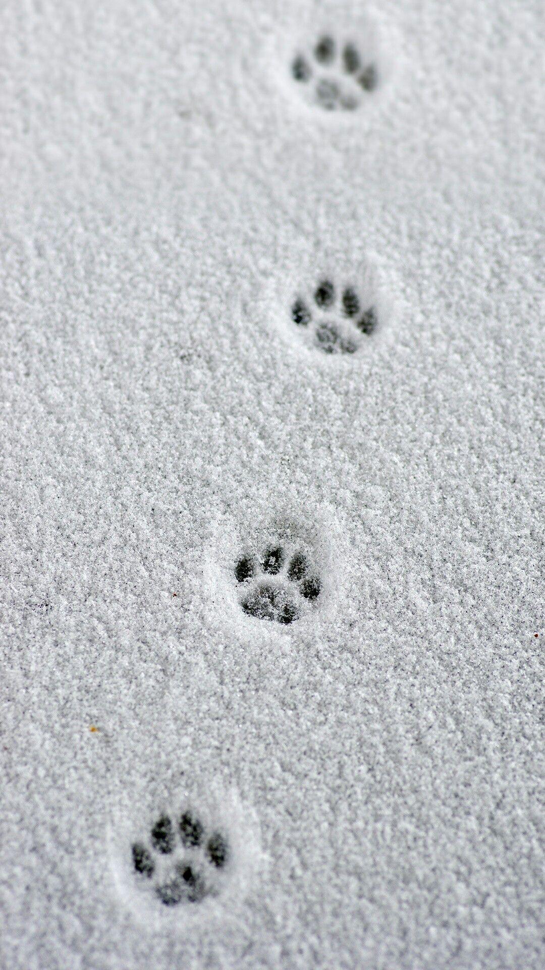 Trace de pattes de chat neige hiver pinterest pattes de chat patte et chats - Trace de patte de chat ...