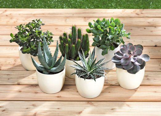 5 Ganz Unterschiedliche Pflanzen Zimmerpflanzen Und Blumen