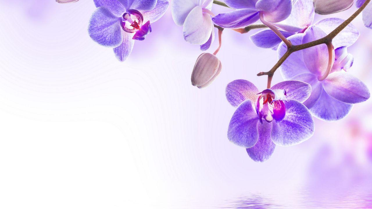 Orchid Flower 4k Horizontal Cvety Fotografii Cvetov Cvetki