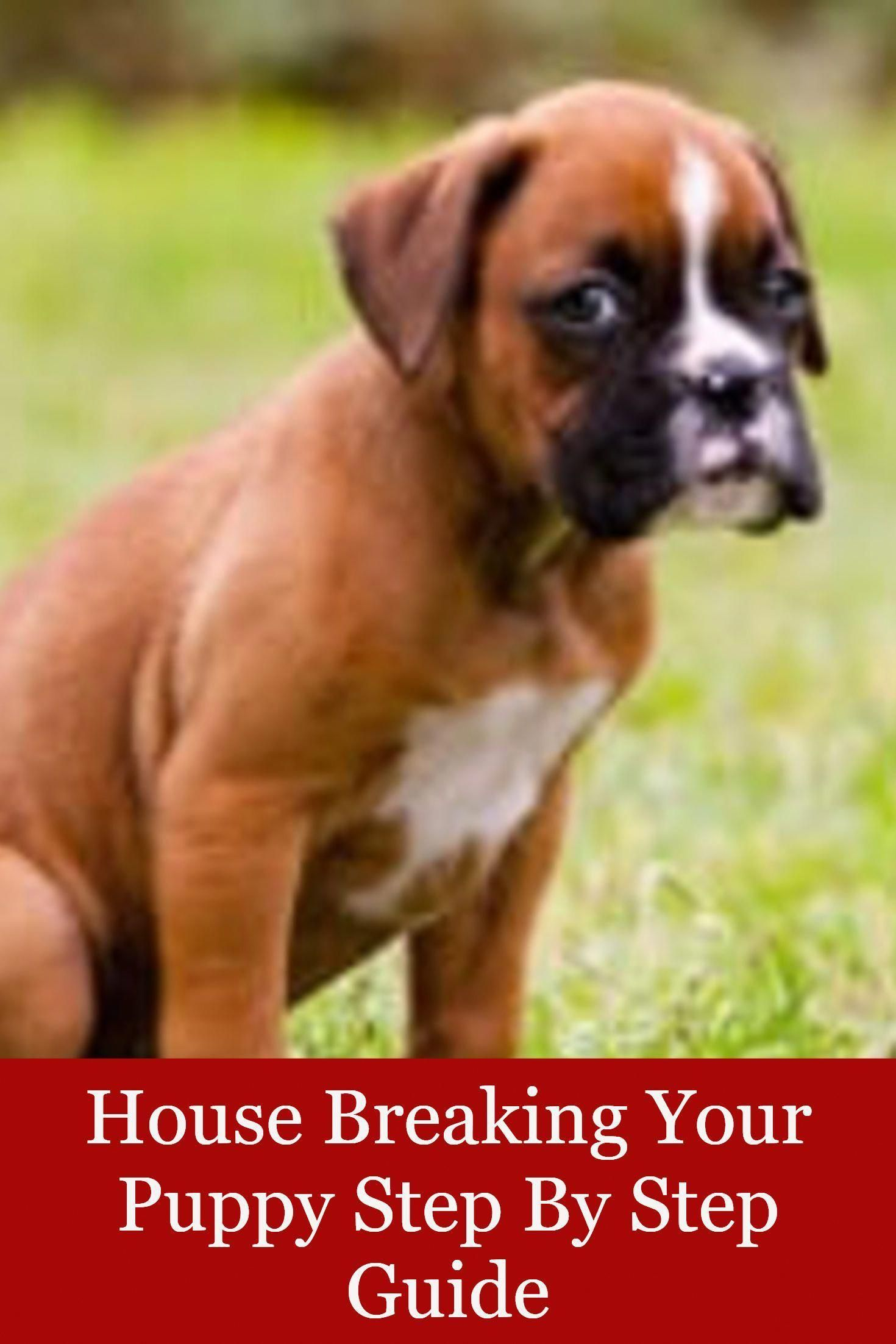 House Breaking Your Puppy Step By Step Guide House Breaking A