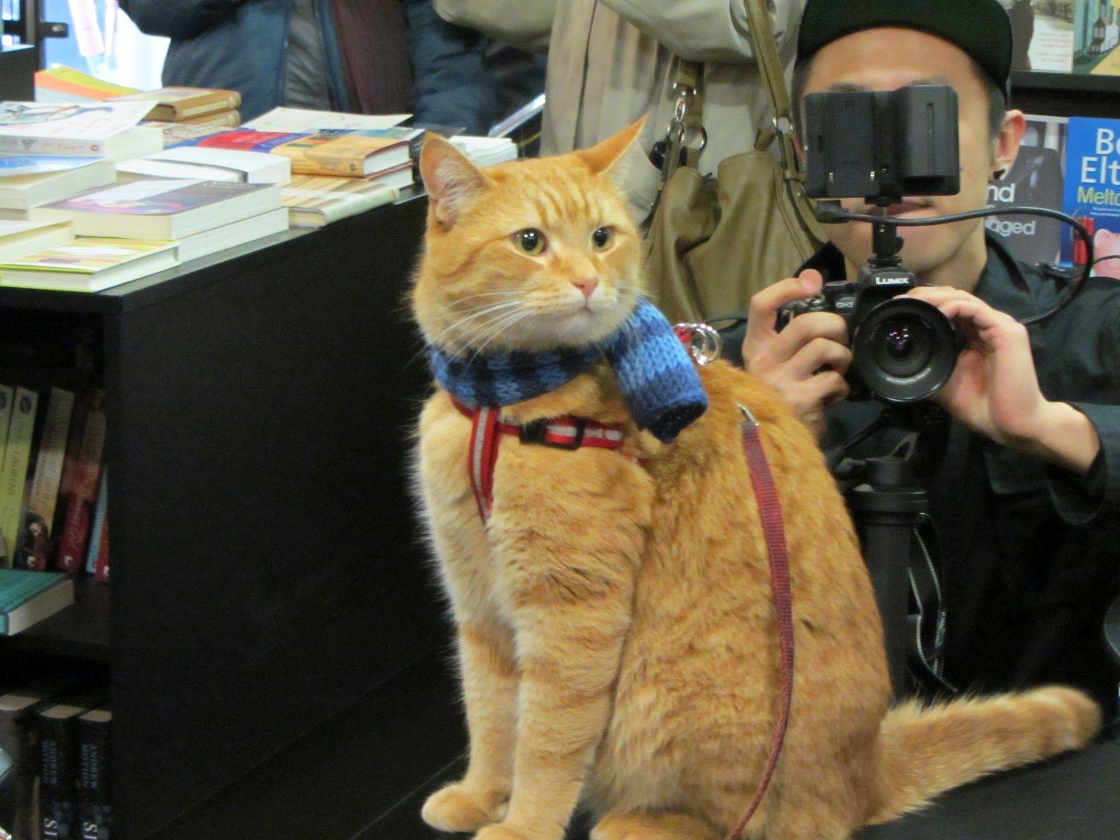 James Street Cat Bob Schattige Dieren Dieren Schattig