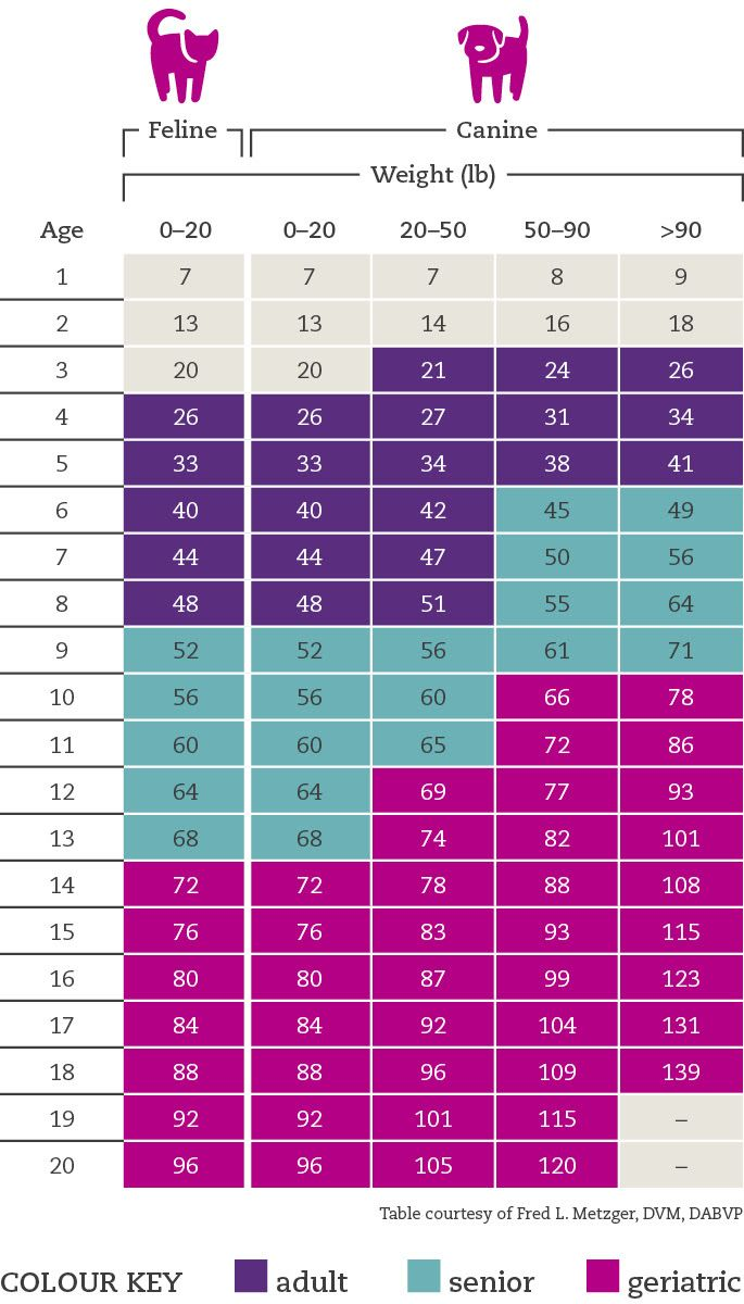 Conversion Chart Dog Years To Human Years Cat Age Chart Cat Ages Dog Ages