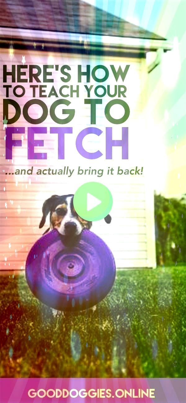 to Teach Your Dog to Fetch Check out these dog training tips that are fun and easyHow to Teach Your Dog to Fetch Check out these dog training tips that are fun and easy W...