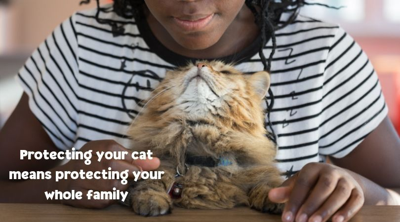 """August 22nd is """"Take Your Cat to the Vet Day."""" This day"""