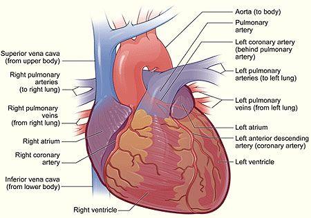 Key Points on Cardiac Arrest #heart #celebdx | Celebrity Health ...