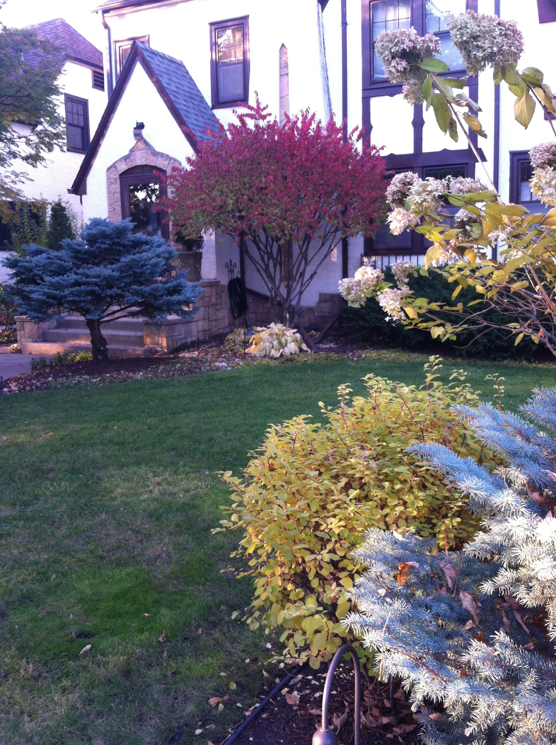 Fall Color with Shrubs