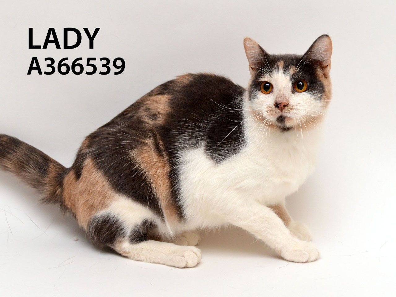 Lady (ID A366539) is a very pretty and dainty 10 month