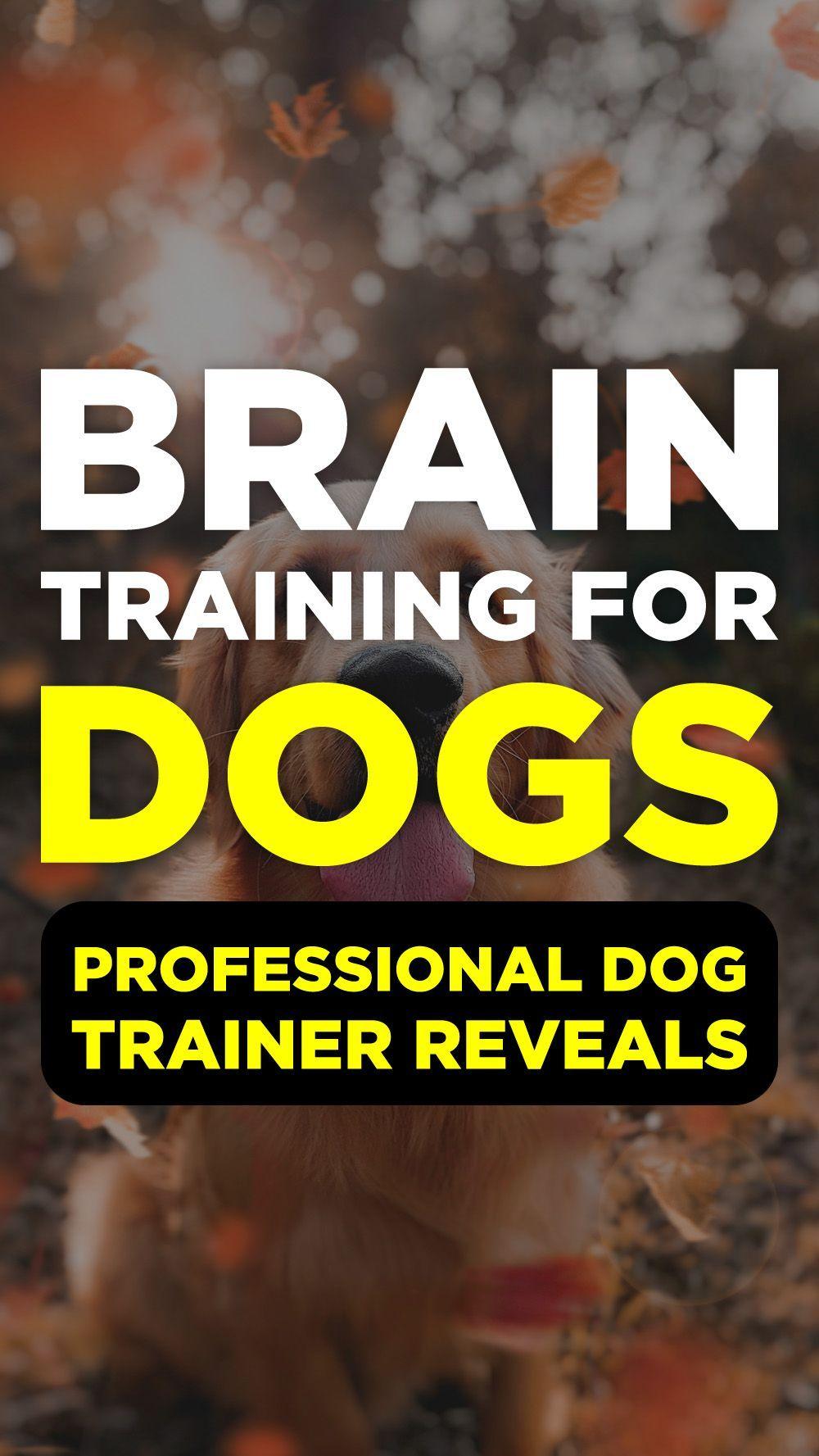 Dog Training, cat tip, cat leash, training dog, poodle