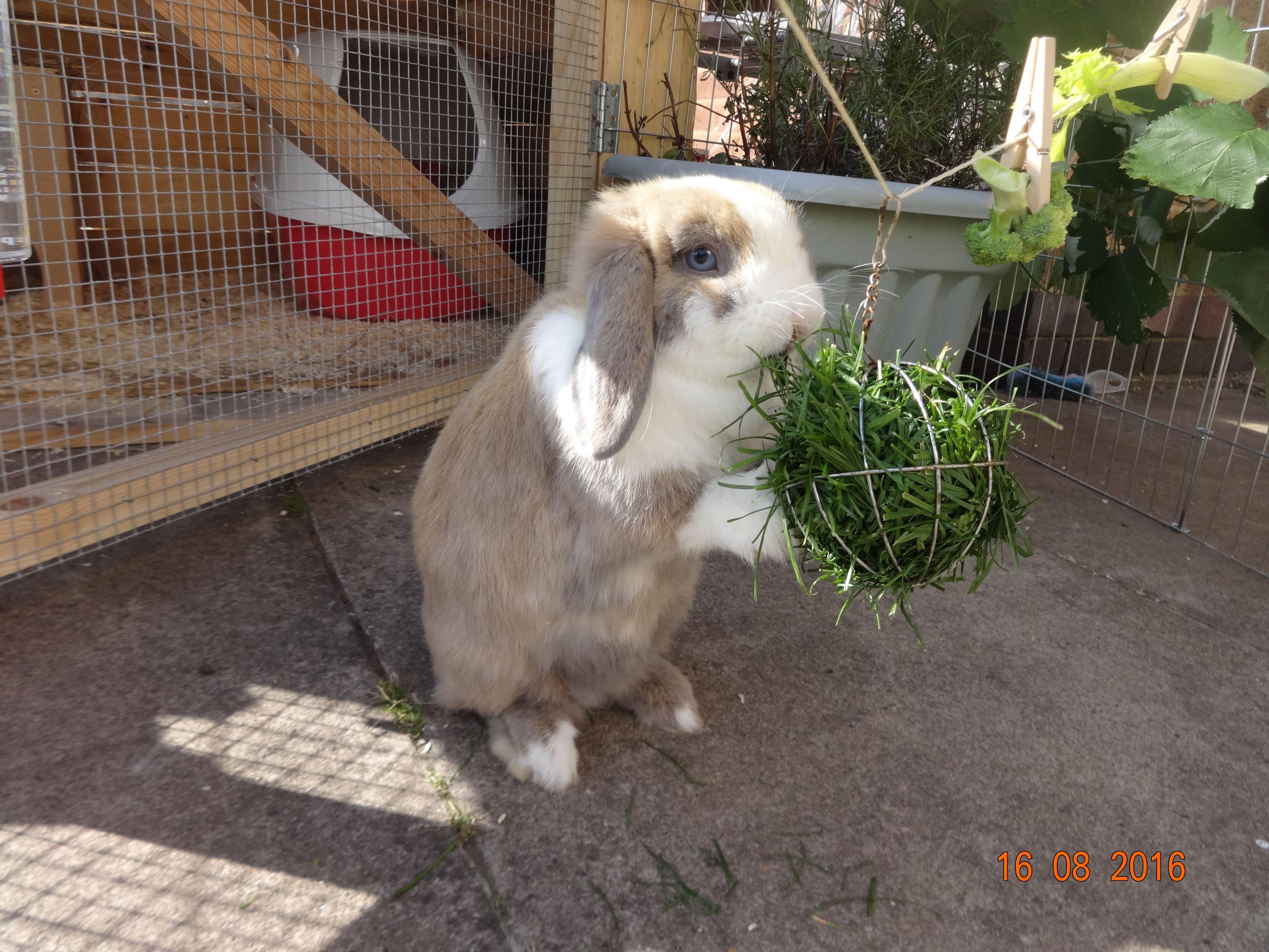 Simple Diy Bunny Hutch