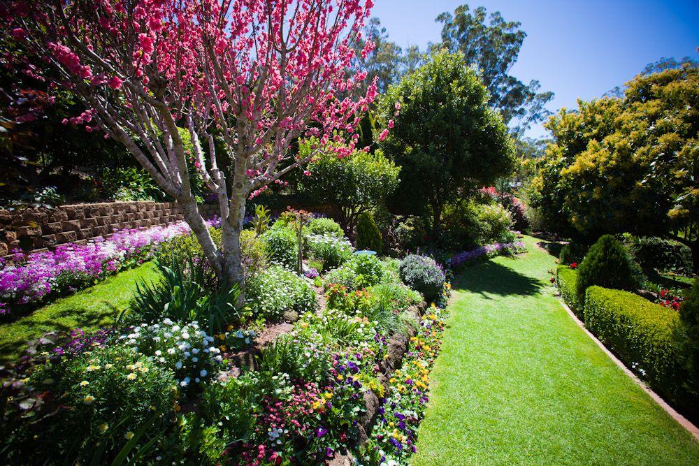 Garden Plant Qld