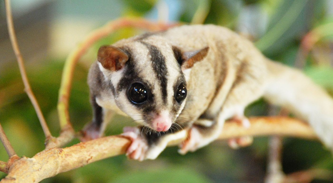 Pin on 10 Exotic Pets You Can Legally Own