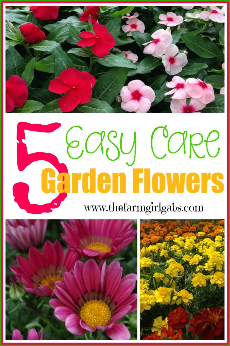 Five Easy Care Garden Flowers Flower Garden Easy Garden