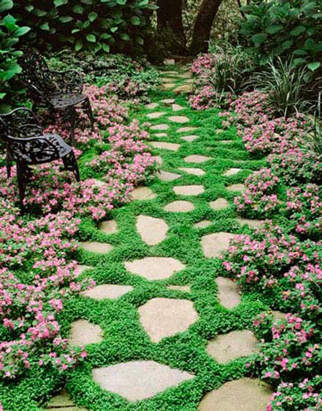Plantas perfectas para sembrar en un camino de jardín Gardens