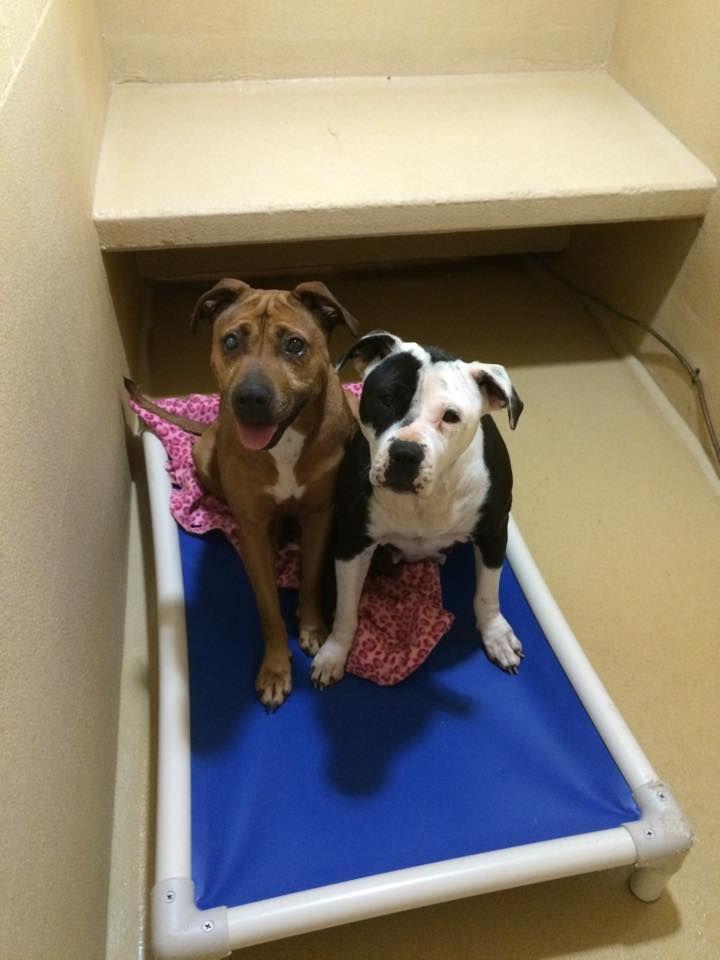 SUPER URGENT!!! York SC, York County animal shelter. Dolly