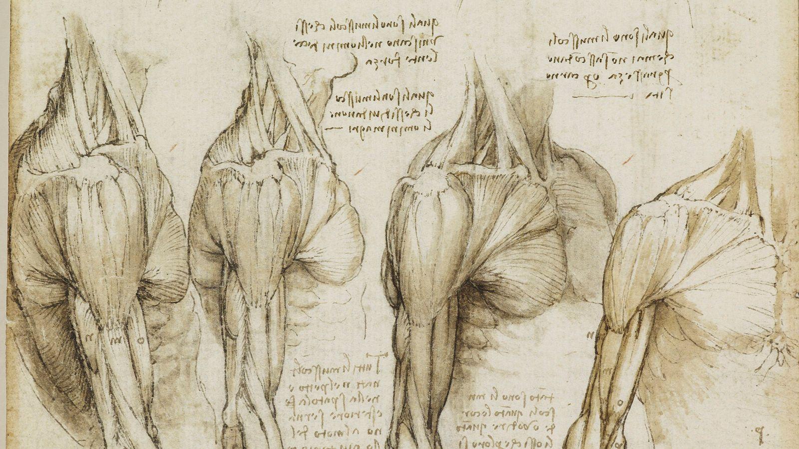 Leonardo Da Vinci Human Anatomy Google Search Figure Leonardo