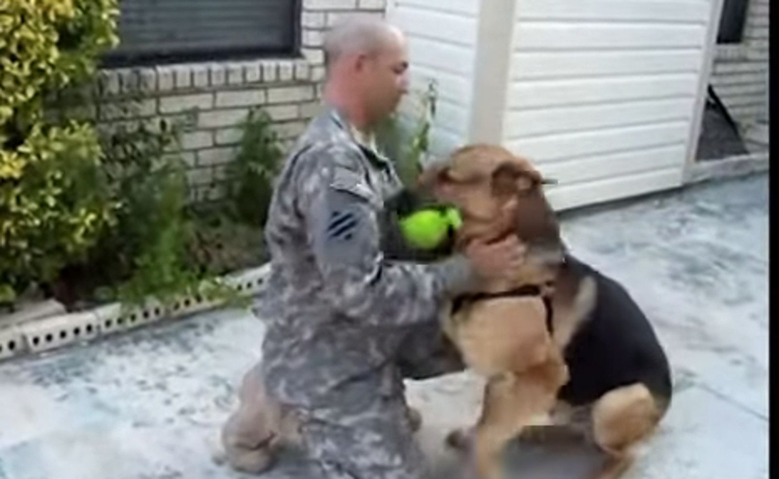 Seeing This German Shepherds Surprise When His Soldier Dad Comes