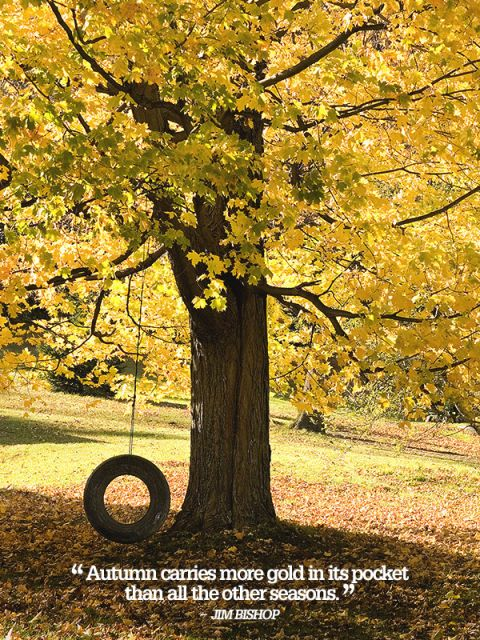 Marvelous Autumn Carries More Gold In Its Pocket Than All The Other Seasons. #Autumn #