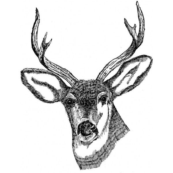 Deer head drawing art public domain image picture ❤ liked on Polyvore featuring fillers, animals, backgrounds, drawings, art, doodle, quotes, text, phrase and saying