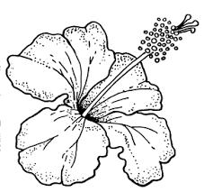 Hibiscus Flower Drawing Outline Google Search Paginas Para Colorear De Flores Como Dibujar Cosas Pirograbado