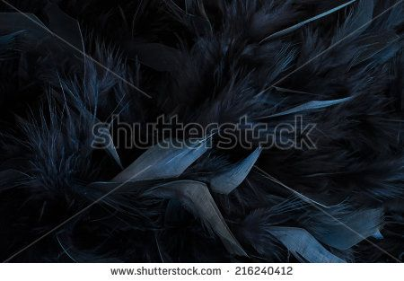 black feathers - stock photo
