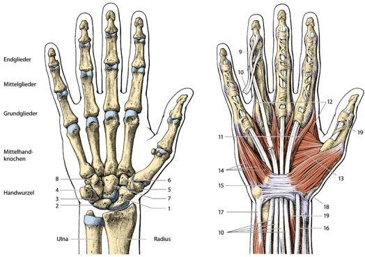 de hand anatomie - Google zoeken | Body art tattoos, Hand