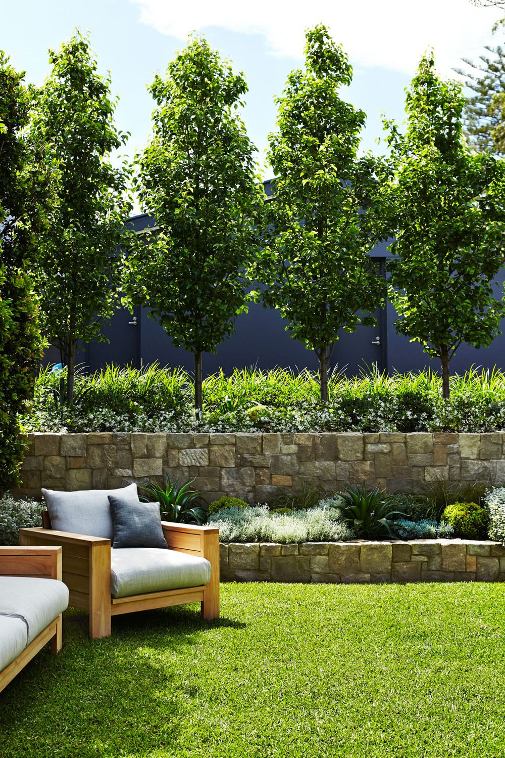 Landscaping With Pear Trees : Fence line ornamental pear jasmine and grass front