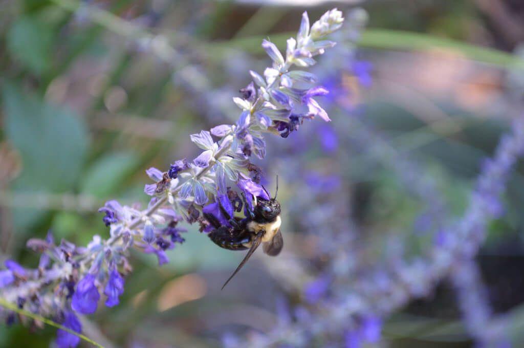 Celebrating Pollinators - Bees, Butterflies, Birds and More