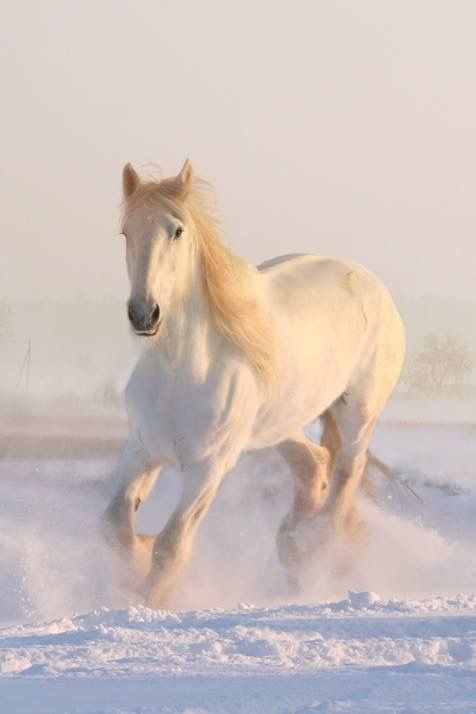 Pin By Rade Bogdanowich On Stallion Horses In Snow Horses