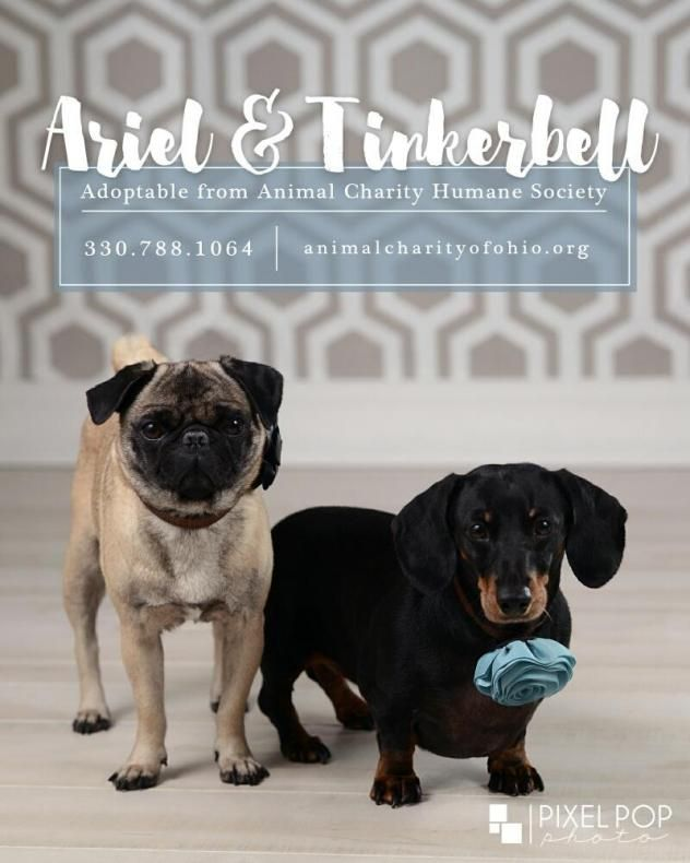 Adopt Ariel And Tinkerbell On Adoption Animals Humane Society