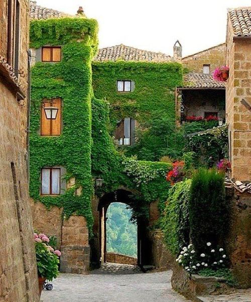 Ivy Arch, Provence, France