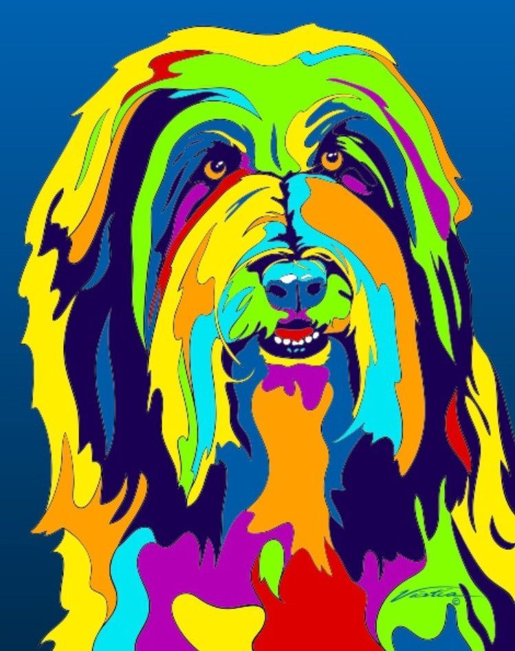 Buy Bearded Collie Matted Prints Canvas Giclees At Multi Color