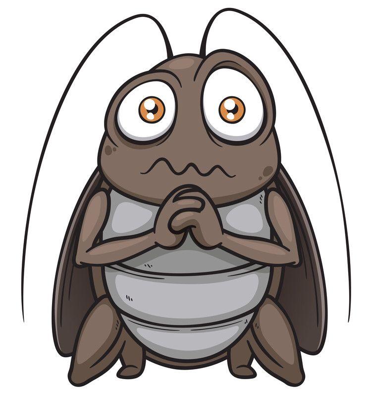 Carcoma woodworm - Como eliminar la carcoma ...