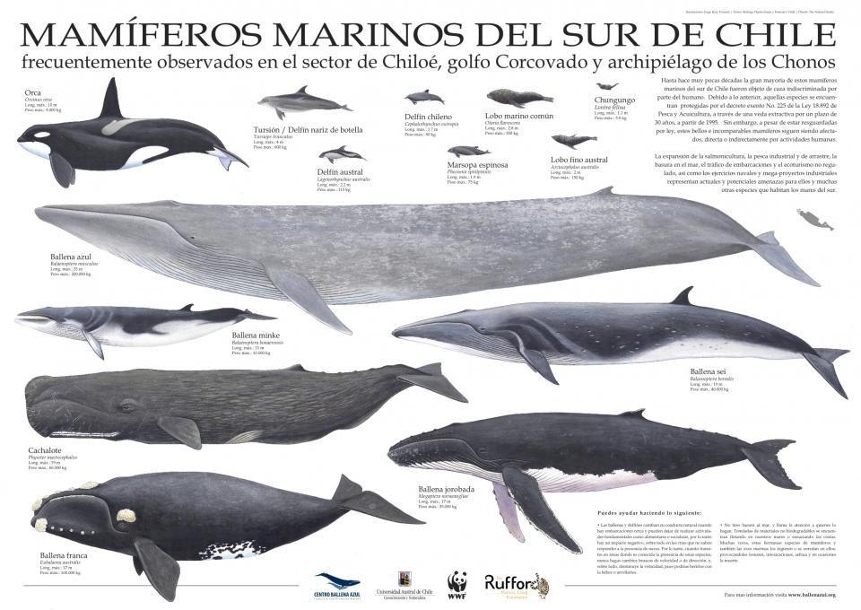Mamíferos Marinos del Sur de Chile