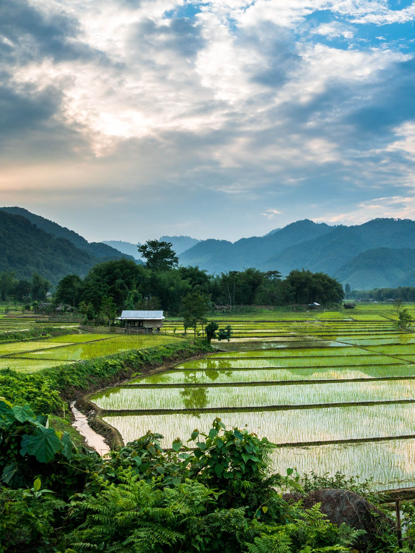 A reflective sunset over the rice paddies surrounding