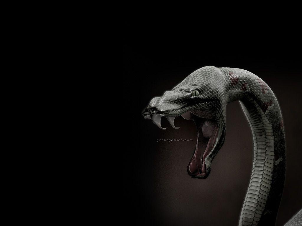 Top Most Dangerous Black Mamba Snake Wallpapers In Hd 1280 1024 Black Snake Wallpapers 43 Wallpapers Adorable Wal Snake Images Snake Wallpaper Snake Facts