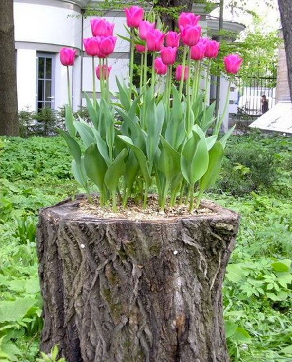 Decorer Une Souche Arbre Avec Des Fleurs