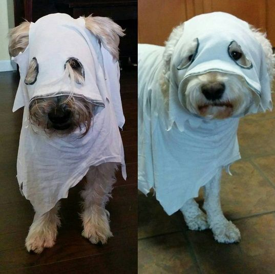 Ghost Dogs & 23 Awesome Dog Halloween Costume Ideas [Pictures | Pinterest | Dog ...