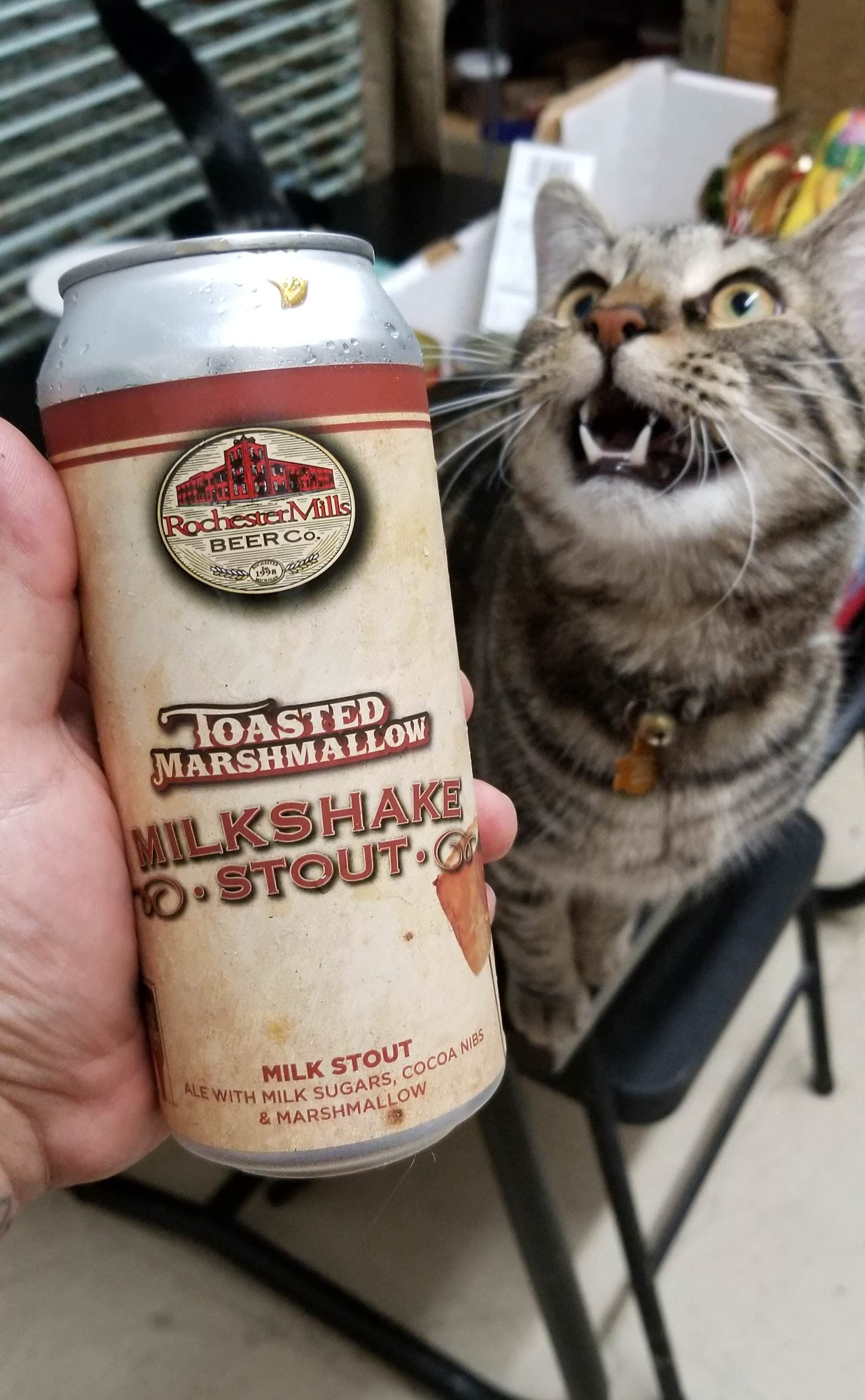 Beer Teefies Kittens Cutest Crazy Cats Cute Cats